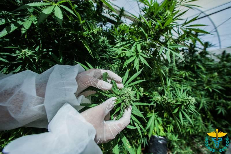 Марихуана и галоперидол марихуана раскраска